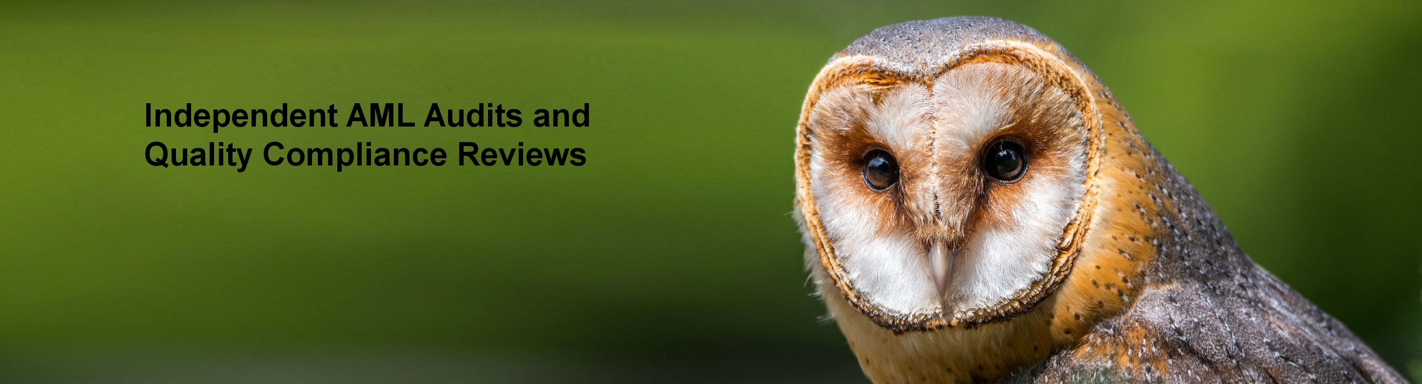Slide 3: Independent AML Audits and Quality Compliance Reviews - An owl stares out of the screen